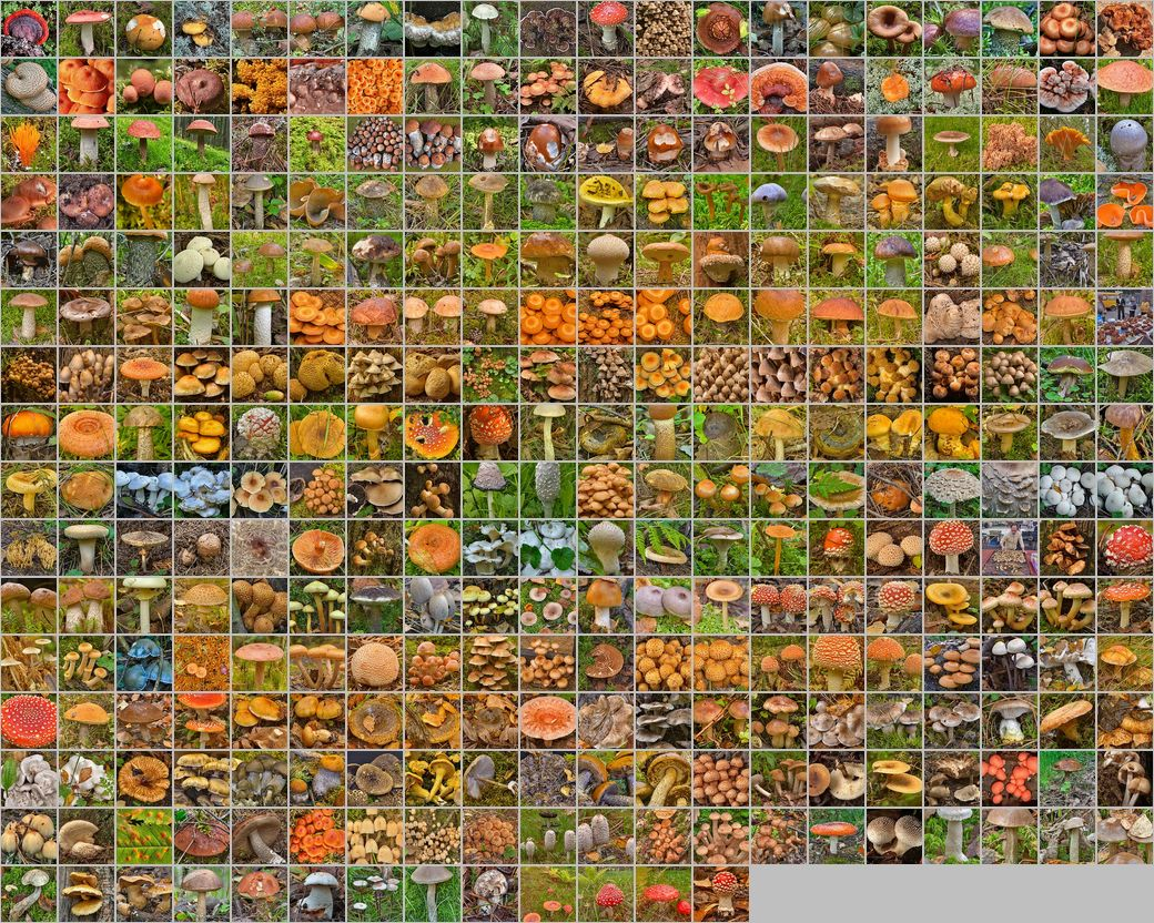 Photomontage of pictures of mushrooms in Russia. Years 2003 - 2015